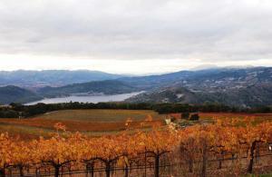 Chappellet-Vineyard---Autumn-Vineyards