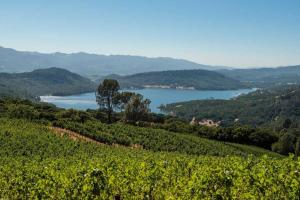 Chappellet-Vineyard---Close-Up-of-Vineyard-and-Lake---Bob-McClenahan-photography