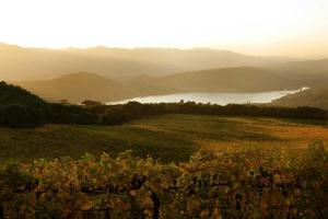 Chappellet-Vineyard---Vineyard-in-soft-light