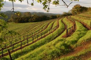 Chappellet-vineyard-terrace